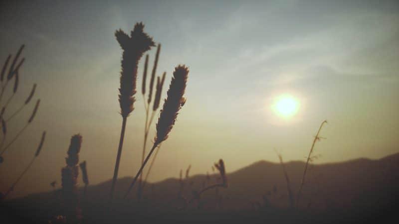 Quels sont les bienfaits du son de blé