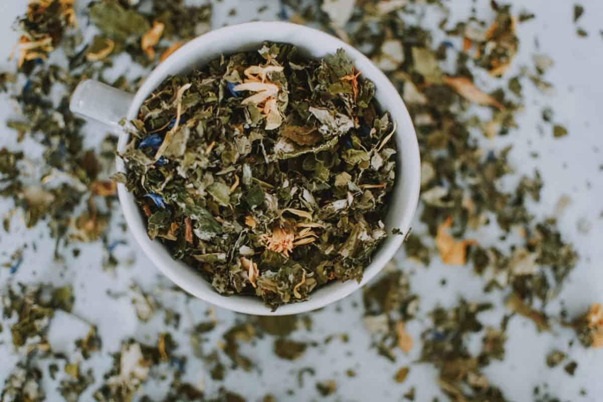 thé aux excréments d'insectes